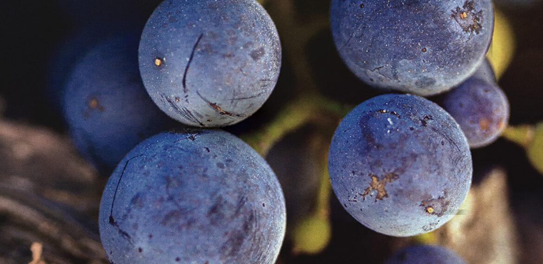 paso wines print